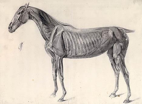 George Stubbs (1724-1806) - Science into Art - Tiermalerei zwischen ...